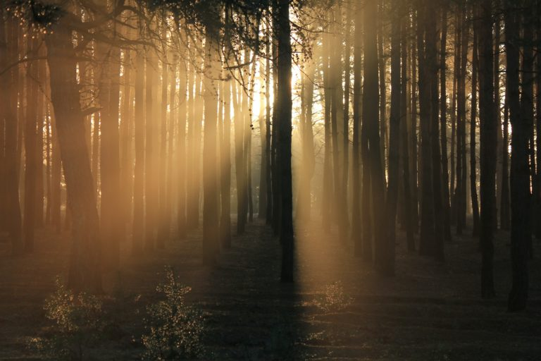 sunlight coming through the woods